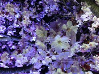 春 - No.404950