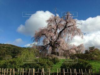 春 - No.404953