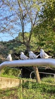 公園の手すりのスズメの写真・画像素材[4886335]