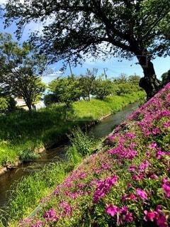 食べ物,自然,風景,花,食事,屋外,フード,草,樹木,草木,飲食