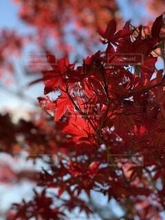 秋の訪れの写真・画像素材[4868449]