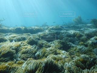 海の畑の写真・画像素材[4869842]