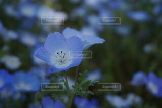青の写真・画像素材[4880578]