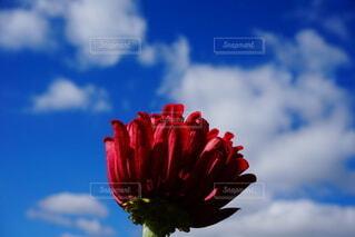お花の写真・画像素材[4880596]