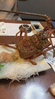 食べ物,動物,食事,屋内,フード,魚介類,伊勢海老,飲食