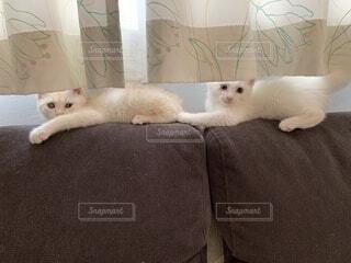 ソファで遊ぶ猫の写真・画像素材[4877359]