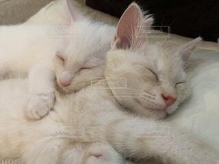 お昼寝をしてる猫の写真・画像素材[4877388]