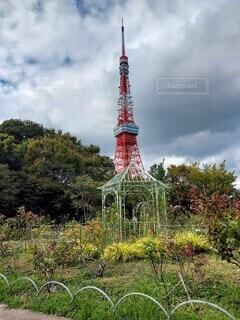 庭園と東京タワーの写真・画像素材[4894200]