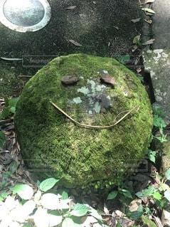屋外,草,岩,墓,草木,菌,ガーデン,非血管陸上植物