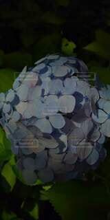 花のクローズアップの写真・画像素材[4865024]