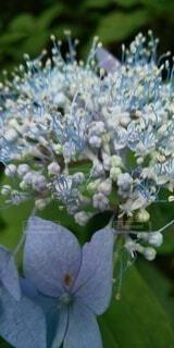 花のクローズアップの写真・画像素材[4877351]