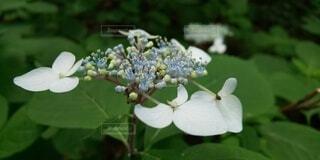 花のクローズアップの写真・画像素材[4877360]