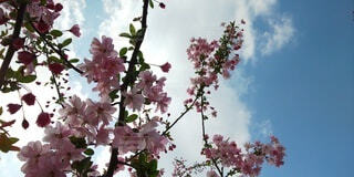 花のクローズアップの写真・画像素材[4877385]