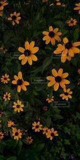 花のクローズアップの写真・画像素材[4877692]