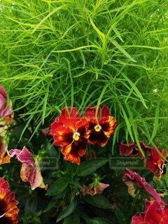 花のクローズアップの写真・画像素材[4877711]