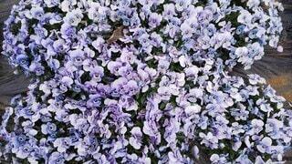 花園の近くの写真・画像素材[4877725]
