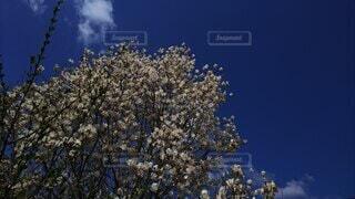 木のクローズアップの写真・画像素材[4877746]