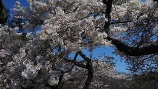 大きな樹木の写真・画像素材[4877749]