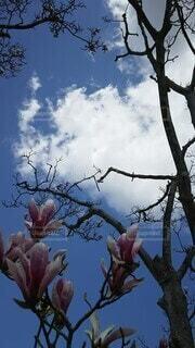 大きな木の写真・画像素材[4877811]