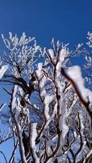 樹氷のクローズアップの写真・画像素材[4879632]