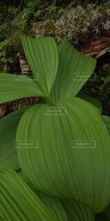 緑の葉の写真・画像素材[4882411]
