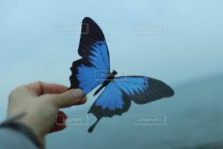空を飛んでいる鳥を抱いている人の写真・画像素材[4869173]