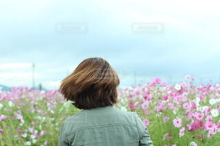 コスモス畑の前に立つ女性の写真・画像素材[4902427]