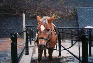 茶色い馬の写真・画像素材[4907268]