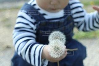 握りしめたタンポポの綿毛の写真・画像素材[4908062]