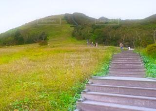 霜降高原キスゲ平園地の写真・画像素材[4945490]