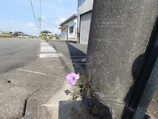 花,屋外,家,地面,草木