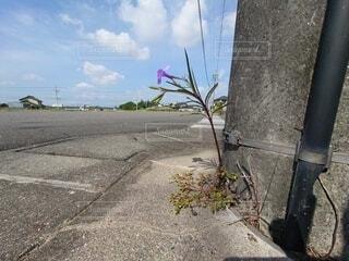 世界にひとつだけの花の写真・画像素材[4907616]
