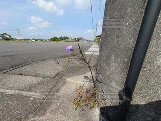 空,花,屋外,歩道,地面,世界にひとつだけの花