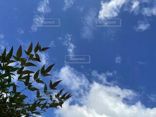 見上げた空の写真・画像素材[4865395]
