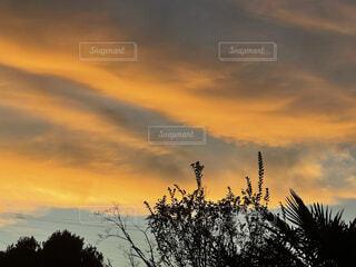 背景に夕日のある木の写真・画像素材[4875954]
