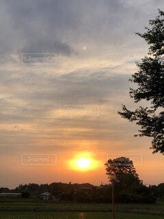 背景に夕日のある木の写真・画像素材[4879423]