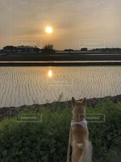 夕日の前に座っている猫の写真・画像素材[4879422]