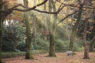 木漏れ日のベンチの写真・画像素材[4873157]