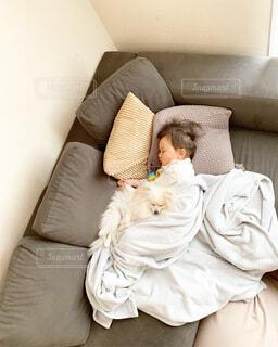 ソファーで昼寝の子と犬の写真・画像素材[4865971]