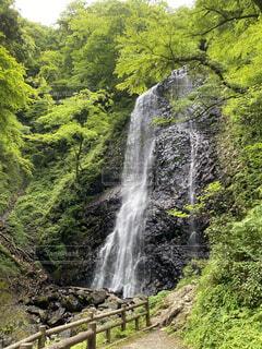 森の中の大きな滝の写真・画像素材[4866257]