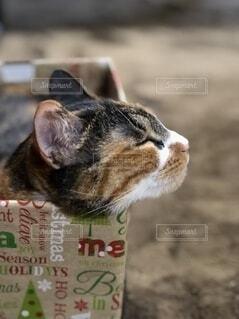 箱入猫の写真・画像素材[4867213]