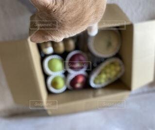 猫と果物の写真・画像素材[4869593]