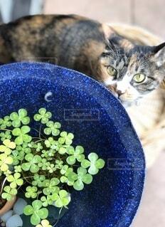 猫とビオトープのウォータークローバーの写真・画像素材[4875211]