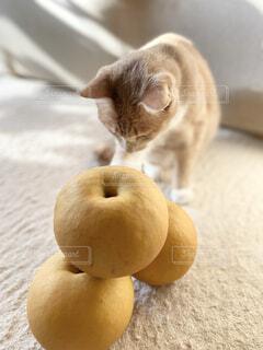 大きな梨と猫の写真・画像素材[4887018]