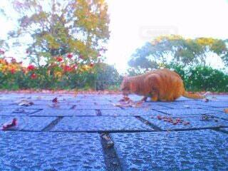 猫,空,秋,動物,散歩,樹木