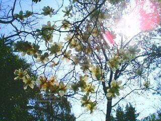 空,屋外,散歩,葉,樹木,草木