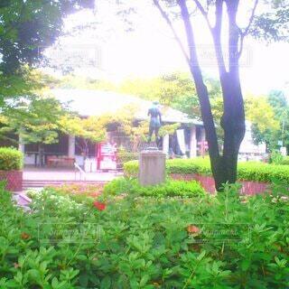 花,屋外,散歩,草,樹木,墓,草木