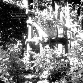 花,屋外,樹木,墓,黒と白