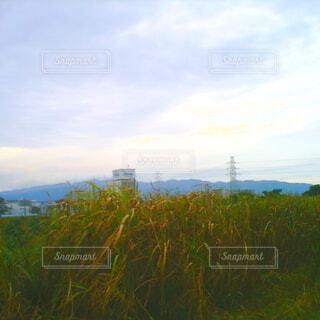 自然,空,屋外,雲,草