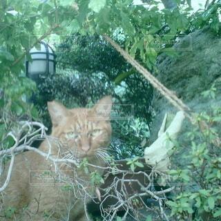 猫,動物,屋外,樹木